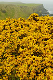 shrubbery stock photography | Ireland, County Antrim, North Antrim Cliff Path at Giant