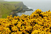 yellow stock photography | Ireland, County Antrim, North Antrim Cliff Path at Giant