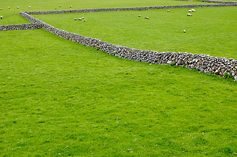 image 4-900-868 Ireland, County Galway, Sheep in field with stone walls