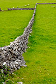 demarcation stock photography | Ireland, County Galway, Sheep in field with stone walls, image id 4-900-872