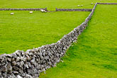 demarcation stock photography | Ireland, County Galway, Sheep in field with stone walls, image id 4-900-874