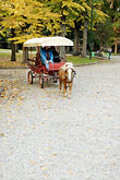 vertical stock photography | Italy, MIlan, Carriage Ride, Giardini Pubblici, image id S4-511-7369