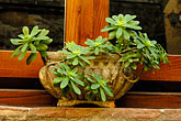 garden stock photography | Italy, Siena, Potted plant in window, image id S4-521-7871
