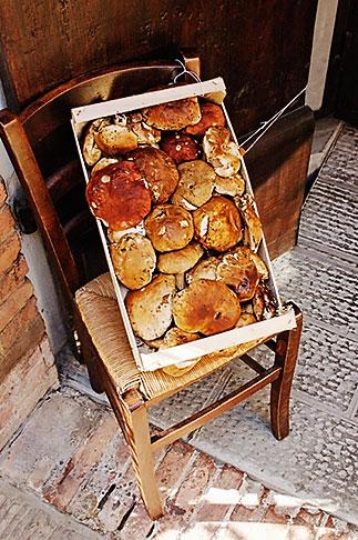 image S4-521-7877 Italy, Siena, Mushrooms
