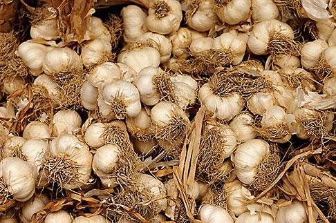 image S4-522-8156 Italy, Siena, Garlic