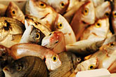 foodstuff stock photography | Italy, Siena, Fish, image id S4-522-8187