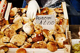 tuscany stock photography | Italy, Siena, Porcini Mushrooms, image id S4-522-8191