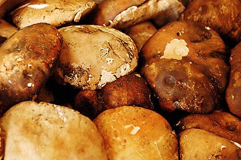 image S4-522-8204 Italy, Siena, Mushrooms