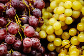 fresh stock photography | Italy, SIena, Grapes, image id S4-522-8476