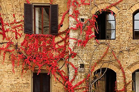 image S4-528-8814 Italy, San Gimignano, Ivy covered wall
