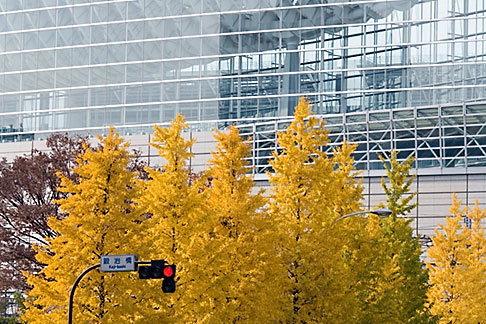 image 5-850-2737 Japan, Tokyo, Maple tree and office building, Marunouchi