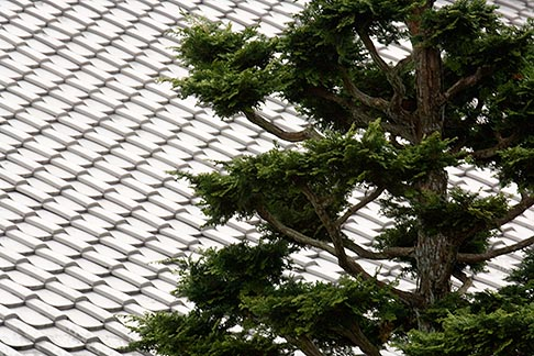 image 5-855-2418 Japan, Kyoto, Konkai Kumyoji Temple, tiled roof and tree