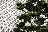 repetition stock photography | Japan, Kyoto, Konkai Kumyoji Temple, tiled roof and tree, image id 5-855-2418