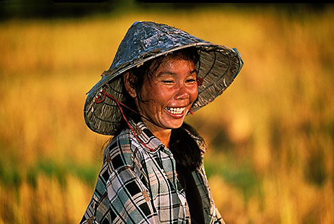 image 8-560-42 Laos, Phon Hong, Woman working in rice fields