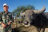 water stock photography | Laos, Plain of Jars, Hmong  man with water buffalo, image id 8-621-88