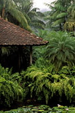 vertical stock photography | Martinique, Jardin de Balata, Gazebo, palms, ferns and water lilies, image id 8-235-4