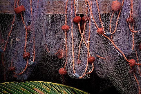 image 8-239-11 Still life, Fishing nets and palm