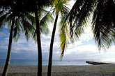 horizontal stock photography | Martinique, Anse Colas, Palms and beach, image id 8-243-34
