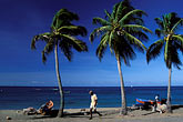 palms on the beach stock photography | Martinique, Route des Anses, Beach, Petite Anse, image id 8-264-21