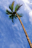 blue sky stock photography | Martinique, Anse des Salines, Palms, image id 9-25-11