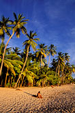 palms on the beach stock photography | Martinique, Anse des Salines, Beach in late afternoon, image id 9-25-17