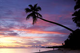 sunset at beach stock photography | Martinique, Anse des Salines, Beach at sunset, image id 9-25-40
