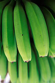 vertical stock photography | Fruit, Green Bananas, image id 9-45-26