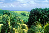 lush stock photography | Martinique, Sugarcane fields, image id 9-45-39