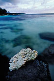 belle mare stock photography | Mauritius, Coral and seashore, Belle Mare, image id 9-200-42