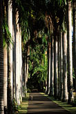 avenue stock photography | Mauritius, Pamplemousses, Avenue of palms, Royal Botanical Gardens, image id 9-201-58