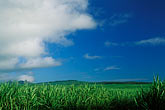 cloudy stock photography | Mauritius, Sugar cane  fields, Bon Acceuil, image id 9-202-81