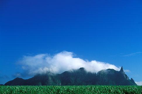 image 9-202-95 Mauritius, Sugar cane fields and Pieter Both Peak