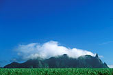 cloudy stock photography | Mauritius, Sugar cane fields and Pieter Both Peak, image id 9-202-95