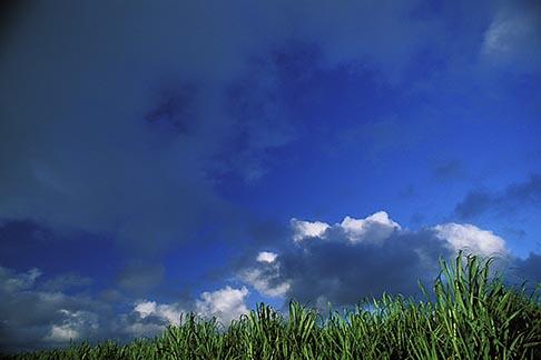 image 9-202-99 Mauritius, Sugar cane fields