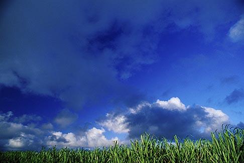 image 9-203-1 Mauritius, Sugar cane fields