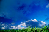 cloudy stock photography | Mauritius, Sugar cane  fields, image id 9-203-1