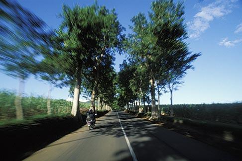 image 9-205-77 Mauritius, Tree lined road, Anse Jonchee