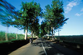 garden stock photography | Mauritius, Tree-lined road, Anse Jonch�e, image id 9-205-77