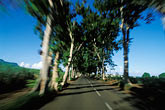 motion stock photography | Mauritius, Tree-lined road, Anse  Jonch�e, image id 9-205-78