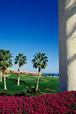 buildings stock photography | Mexico, Cabo San Lucas, Palms and flowers, image id 0-52-64
