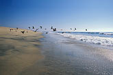 the birds stock photography | Mexico, Baja California Sur, Beach scene, Playa los Cerritos, image id 0-62-76