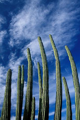 image 0-64-9 Mexico, Baja California Sur, Cactus