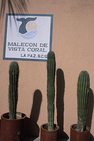 image 0-80-10 Mexico, La Paz, Cactus and wall, the Malecon