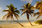 blue sky stock photography | Mexico, Riviera Maya, Tulum, Palms on the beach, image id 4-850-2929