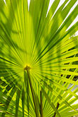 frond stock photography | Mexico, Yucatan, Sian Ka