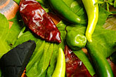 chili peppers stock photography | Mexican Food, Typical ingredients for Mayan Cuisine, Chaya leaves, achiote, habaneros, image id 4-850-3748
