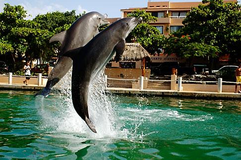 image 4-850-4181 Mexico, Riviera Maya, Puerto Aventuras, Dolphin Discovery