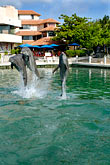 intelligent stock photography | Mexico, Riviera Maya, Puerto Aventuras, Dolphin Discovery, image id 4-850-4209
