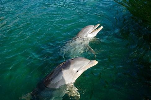 image 4-850-4261 Mexico, Riviera Maya, Puerto Aventuras, Dolphin Discovery