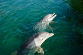 together stock photography | Mexico, Riviera Maya, Puerto Aventuras, Dolphin Discovery, image id 4-850-4261